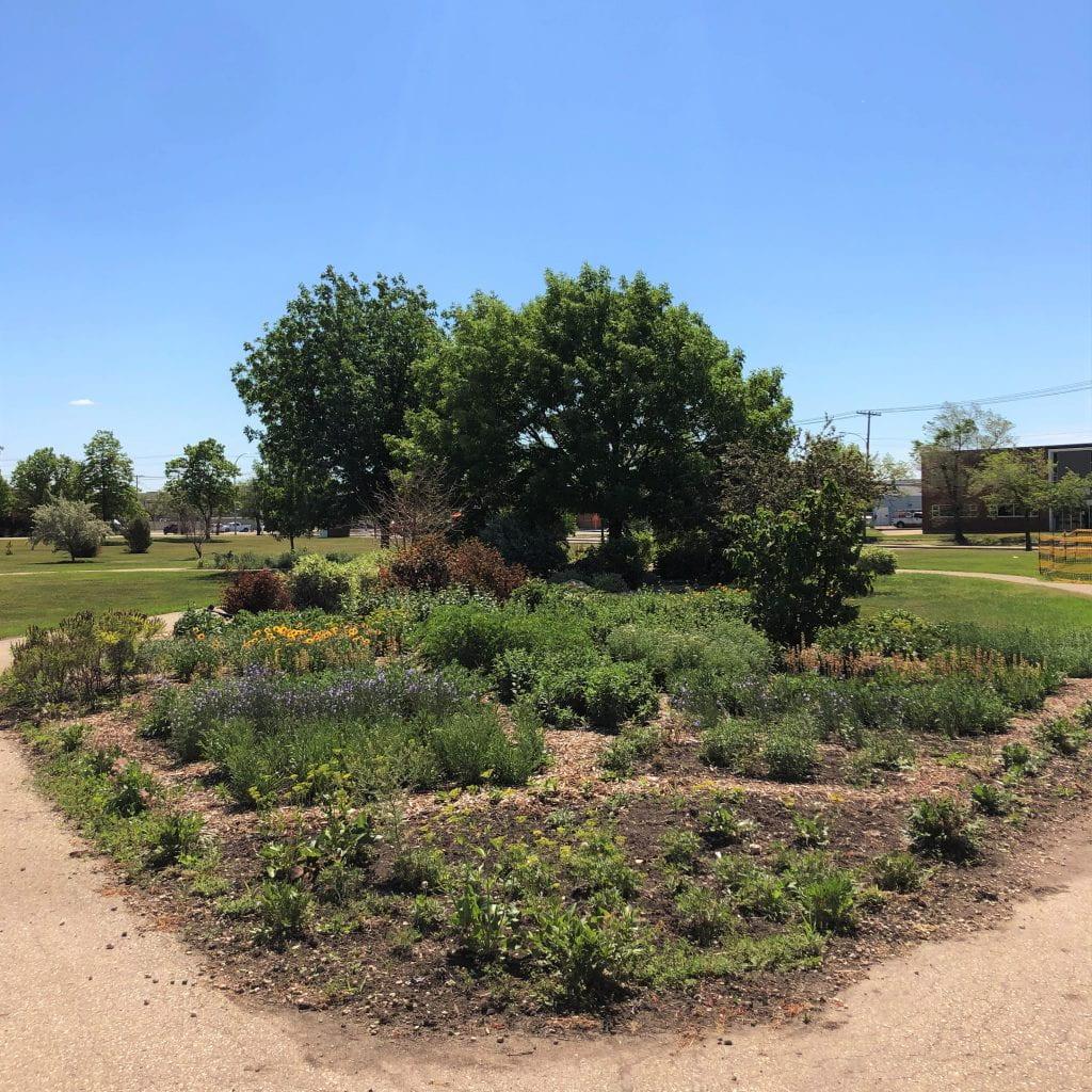 The Pollinator Garden in Full Bloom