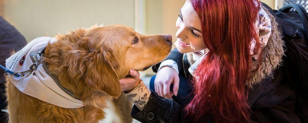 Girl petting a dog