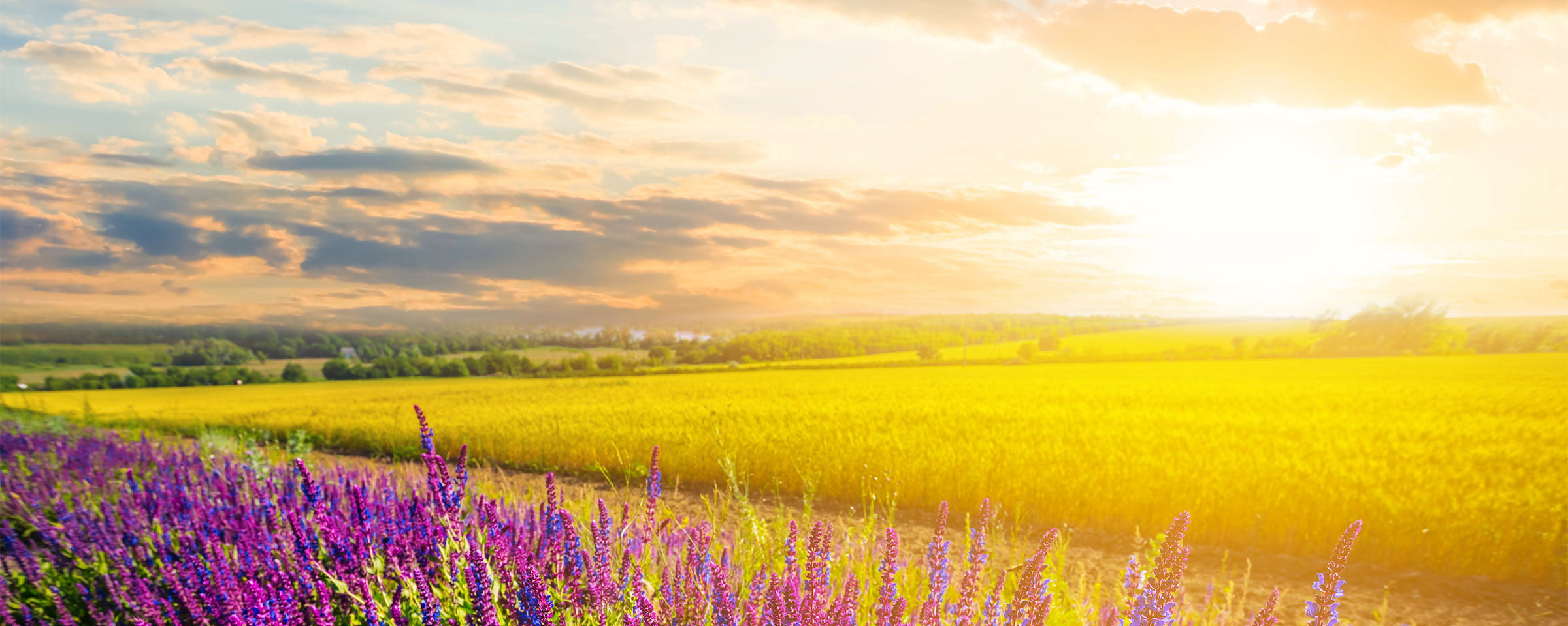 Field of wheat and flowers