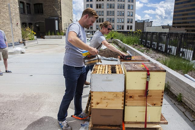 Beehives on top of PGI. Chris Kirouac from Beeproject Apiaries uses a bee smoker which has the effect of calming the bees.