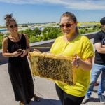 A woman holds up a slab of honeycomb full of pacified bees.