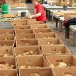 Rows and rows of boxes filled with potatoes line a table. At the end, a woman is placing a potato in a box.