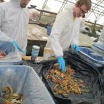 With gloves on, two students sort through food scraps during a waste audit.