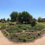 The pollinator garden at Notre Dame Campus.