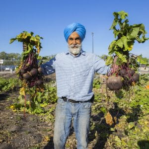 Grounds Gardener Shivcharan Sandhu holds up two huge bunches of beets in each hand at the NDC Campus garden.