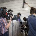 Animal Health: Dairy Farm
