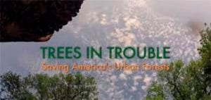 Trees in trouble cover art