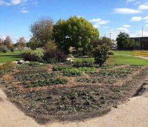 Pollinator garden, Notre Dame Campus