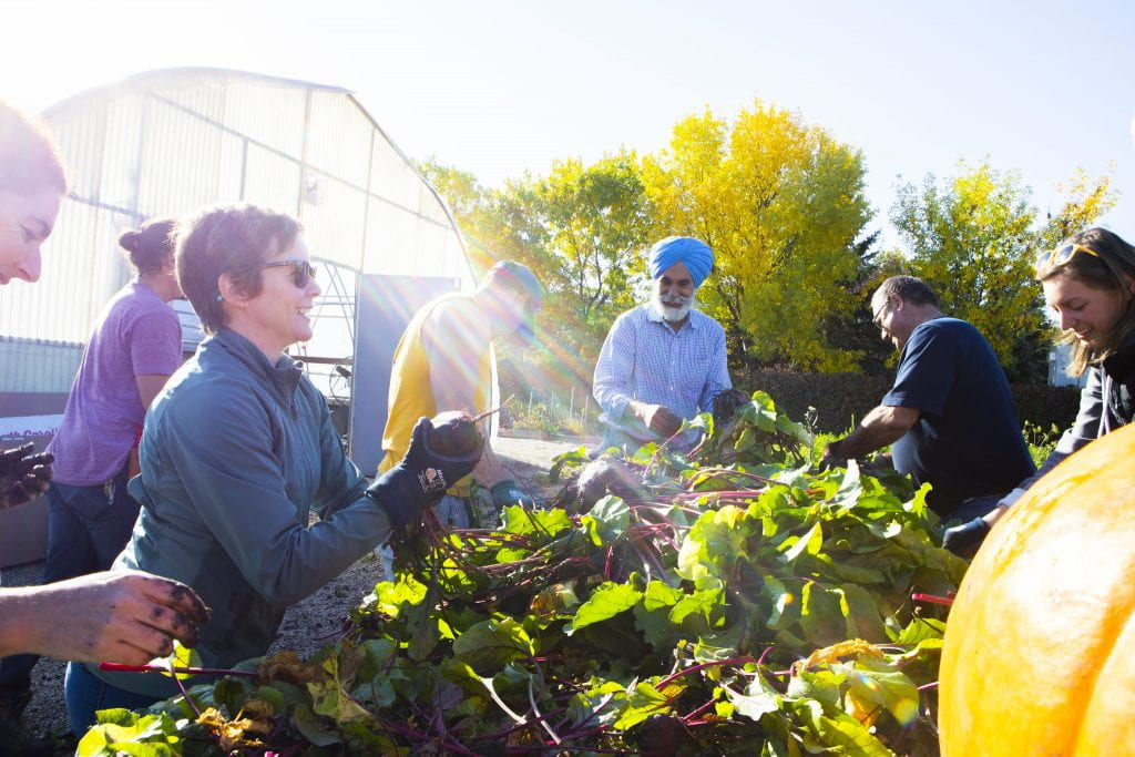 PEople harvesting community garden